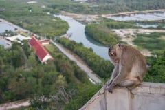 Singe thaïlandais Photo libre de droits