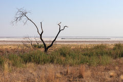 Singe tree without leaves and grasslands landscape. The Ghost train at salt lake.  Baskunchak, Bogdo, summer evening Stock Photo