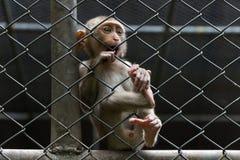 Singe triste dans la cage Photos stock