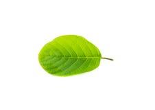 Singel isolerat blad på en vit Royaltyfria Foton