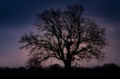 Singeltreesilhouette på solnedgången Royaltyfri Bild