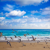 Singer Island beach at Palm Beach Florida US Royalty Free Stock Image