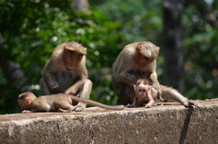 Singes Photographie stock