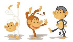 singes Photo libre de droits
