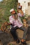 Singes buvant à la bouteille dans l'Inde Photographie stock libre de droits