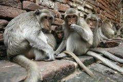 singes d'économie Images stock