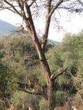 Singes d'arbre Photos stock