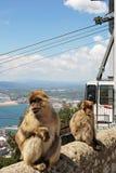 Singes de Barbarie, Gibraltar Photo libre de droits