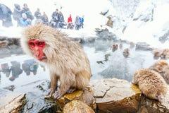Singes de neige photographie stock libre de droits