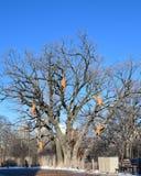 Singes de vacances dans un arbre dormant photos libres de droits