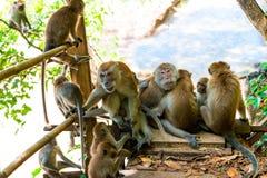 singes et jeunes adultes sur la traînée dans Thayland, Krabi image stock