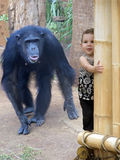 Singes imitantes Images libres de droits
