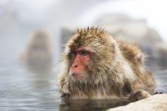 Singes japonais de neige Images libres de droits