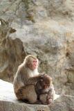 singes japonais sauvages de toilettage à Beppu, Oita Photos stock