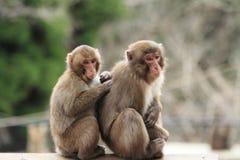 singes japonais sauvages de toilettage à Beppu, Oita Image stock