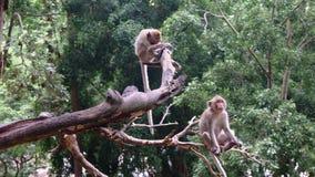 Singes se reposant sur l'arbre images stock