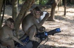 Singes se reposant sur une moto dans un temple Angkor Vat Photos libres de droits