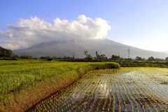 Singgalang mountain. Landscape and paddies field Stock Image