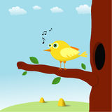 Singing bird Stock Images
