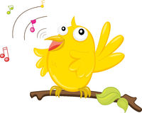 Singing bird Stock Image