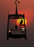 Singing bird in cage, against the setting sun Stock Photo