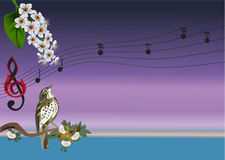 Singing bird and flowers illustration Stock Photography