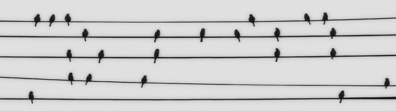 23 singing birds. Silhouettes of a flock of birds gathered on several electric wires royalty free stock photo