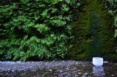 Singing Bowl. In California redwoods Royalty Free Stock Images