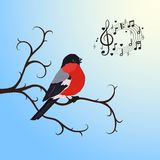 Singing bullfinch bird on a tree branch Stock Image