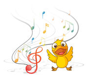 The singing chick Stock Photo