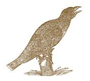 Singing common cuckoo cuculus canorus sitting on a tree trunk. Illustration after a historic woodcut from the 16th century vector illustration