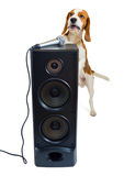 Singing dog Royalty Free Stock Photo