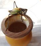 singing grasshopper  in winter Stock Photo
