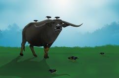 Singing minah and buffalo. Black singing minah with big buffalo Royalty Free Stock Images