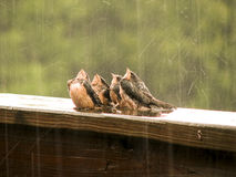 Singing in the rain Royalty Free Stock Photography