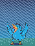 Singing in the Rain. Bluebird singing happily in the rain Stock Photos