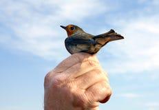 Singing robin migratory bird (lat. Erithacus rubecula) Stock Image