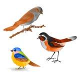 Singing smalls birds Black Redstart titmouse Sparrow vintage  set six vector  animals illustration. For design editable hand draw Royalty Free Stock Images