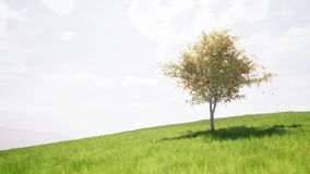 Singl在一个绿色草甸的秋天树 库存例证