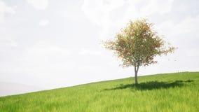 Singl autumn tree on a green meadow. Field stock video