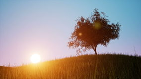 Singl autumn tree on a green meadow sunset. Field stock footage