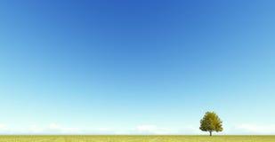 Singl autumn tree on a meadow 3D render. Singl autumn tree on a yellow meadow 3D render Royalty Free Stock Image