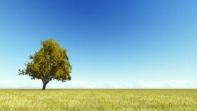 Singl autumn tree on a meadow 3D render. Singl autumn tree on a yellow meadow 3D render Stock Images