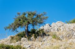 Acacia Tree on Rocky Mountain Slope, Greece. A single acacia tree on a desolate rocky Greek mountain slope, with a clear blue sky, Greece stock image