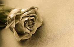 Golden rose on golden background Stock Images