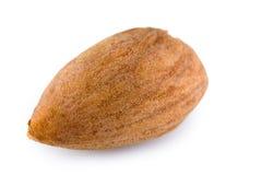 Single almond nut Royalty Free Stock Photo