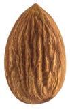 Single almond nut isolated on white background Royalty Free Stock Image