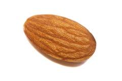 Single Almond Seed Close up Extreme Macro Shot. Isolated on a white background Stock Photo