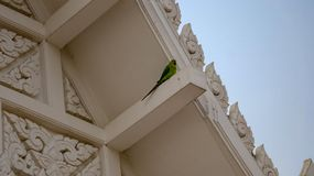 Single alone parrot royalty free stock photography