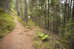 A single alpine path splits in two different directions. It's an. Autumnal cloudy day Stock Image